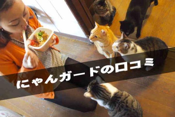 猫の網戸を破る対策をダイソー100均商品で自作する方法|動画で解説