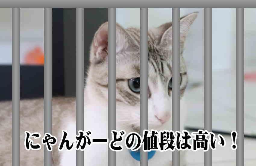 猫工房 ニャンガード