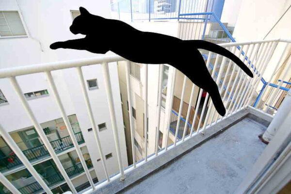 マンションで猫を飼うならべランダから脱走や転落防止対策してます?