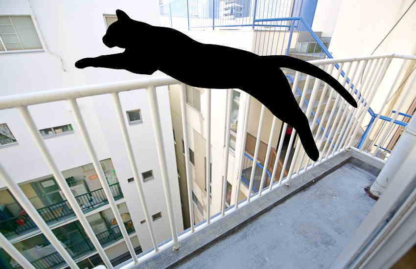 猫 マンション 転落防止